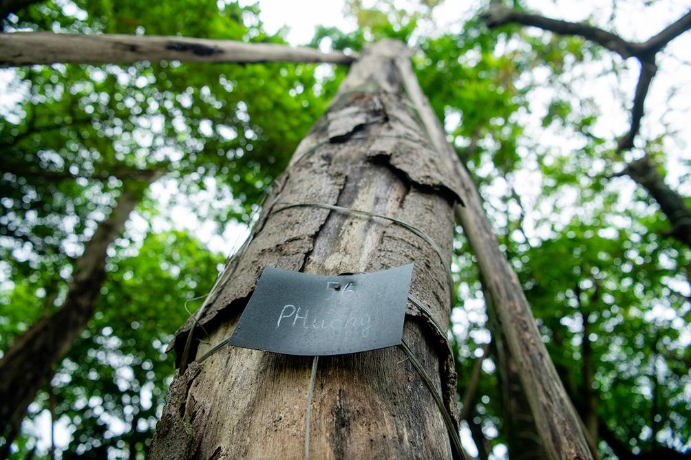 Hàng cây cổ thụ đường Kim Mã sau 5 năm đánh chuyển: Sống dở, chết dở, không ai chăm sóc - hình ảnh 12