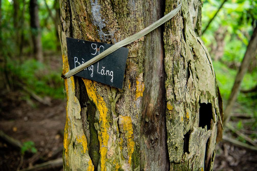 Hàng cây cổ thụ đường Kim Mã sau 5 năm đánh chuyển: Sống dở, chết dở, không ai chăm sóc - hình ảnh 13