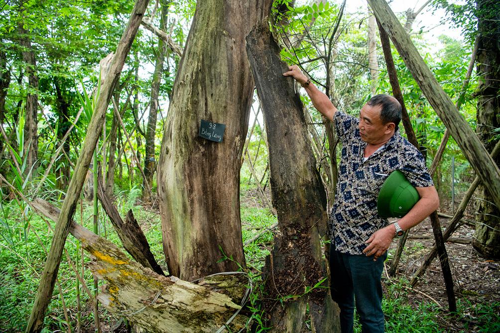 Hàng cây cổ thụ đường Kim Mã sau 5 năm đánh chuyển: Sống dở, chết dở, không ai chăm sóc - hình ảnh 4