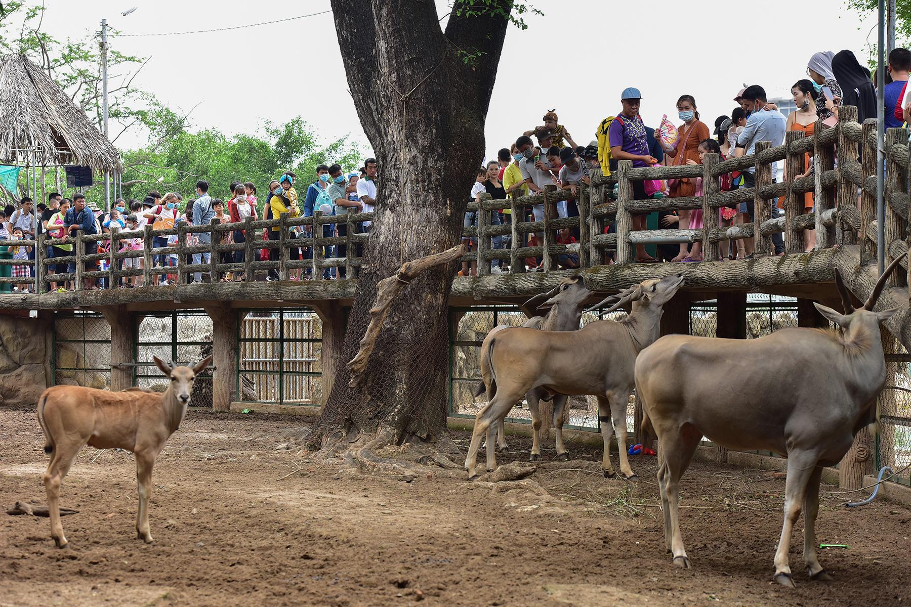 Người dân ùn ùn đi chơi lễ, toát mồ hôi chờ mua vé vào cổng Thảo Cầm Viên - hình ảnh 9