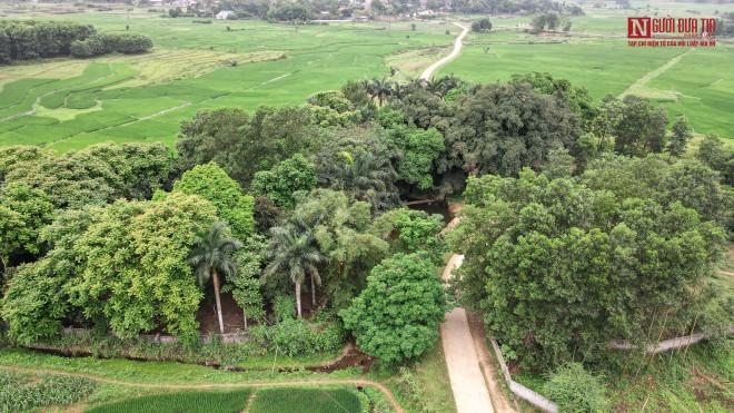 """Bí ẩn cây """"ma làng"""" hơn 800 tuổi ở Hoà Bình - 3"""