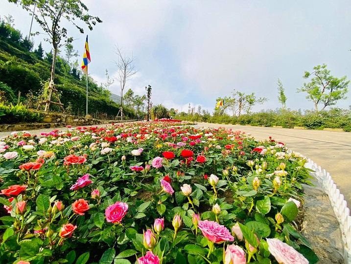 Chớm hè, cùng ngắm vẻ đẹp lãng mạn của thung lũng Mường Hoa và đỉnh Fansipan - 5