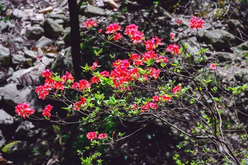 """Hẻm núi được mệnh danh """"bí ẩn địa lý thế giới"""", cảnh vật yên bình, đẹp xuất sắc - hình ảnh 9"""