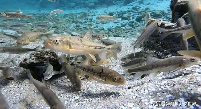 Hồ bí ẩn nhất Tây Tạng, khối lượng cá cực lớn nhưng không ai dám đánh bắt - hình ảnh 5