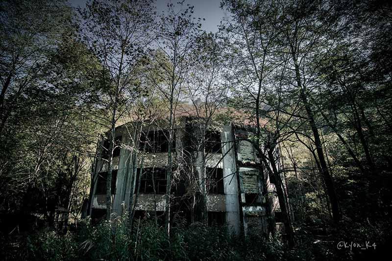 Ngôi trường bỏ hoang suốt 47 năm, bị cây cối nuốt chửng, khung cảnh đầy ma mị - hình ảnh 2