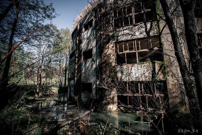 Ngôi trường bỏ hoang suốt 47 năm, bị cây cối nuốt chửng, khung cảnh đầy ma mị - hình ảnh 3
