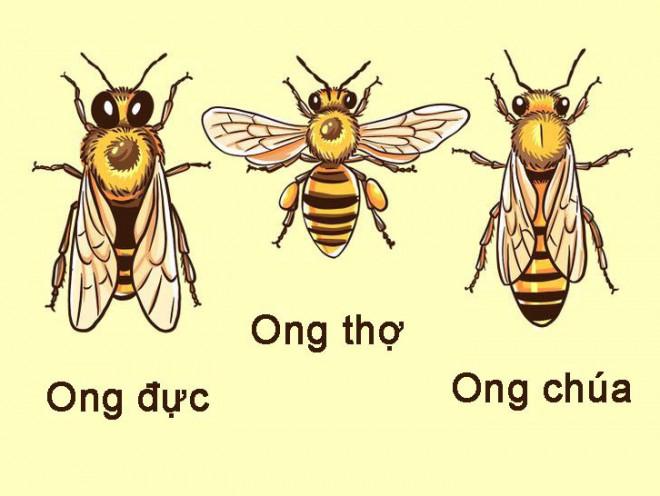 Khi phải đối mặt với khó khăn, hãy suy nghĩ như một con ong - 3