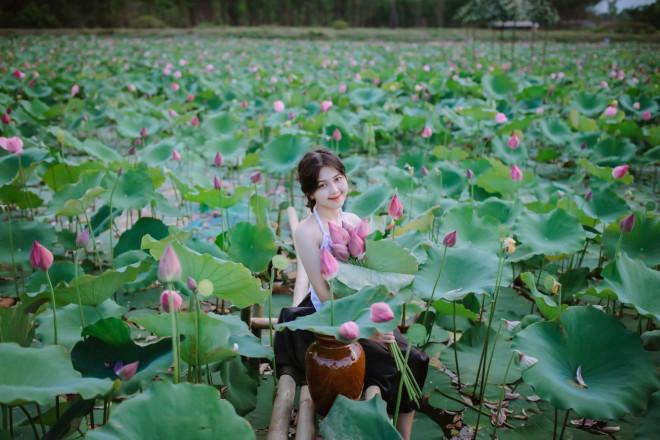"""Quảng Trị: Sen hồng đang mùa nở rộ, bạn đã chụp bộ ảnh """"sống ảo"""" nào chưa? - 1"""