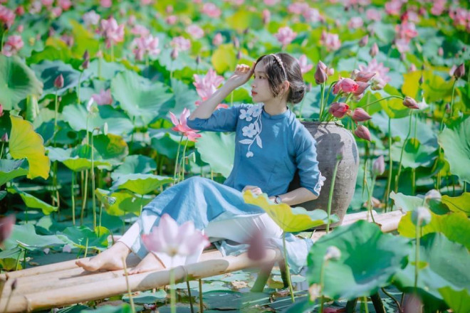 """Quảng Trị: Sen hồng đang mùa nở rộ, bạn đã chụp bộ ảnh """"sống ảo"""" nào chưa? - 5"""