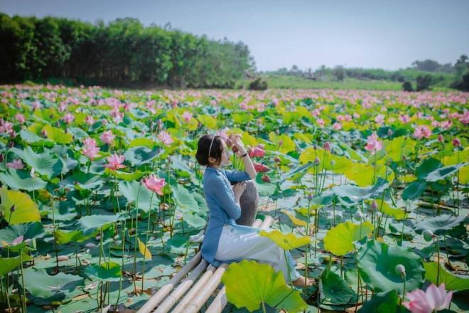 """Quảng Trị: Sen hồng đang mùa nở rộ, bạn đã chụp bộ ảnh """"sống ảo"""" nào chưa? - 4"""