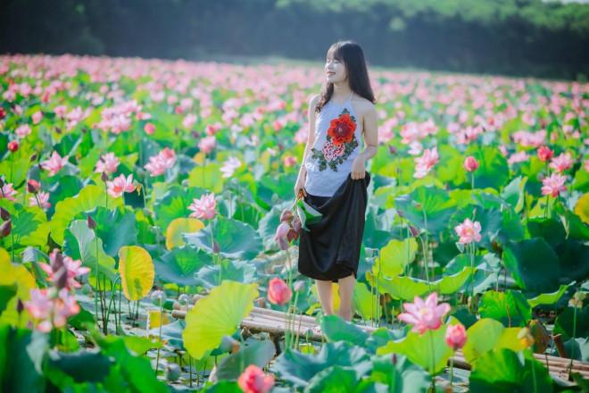 """Quảng Trị: Sen hồng đang mùa nở rộ, bạn đã chụp bộ ảnh """"sống ảo"""" nào chưa? - 3"""
