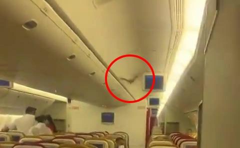 Video: Sốc với con vật bay trong khoang hành khách máy bay khởi hành từ Ấn Độ - hình ảnh 1