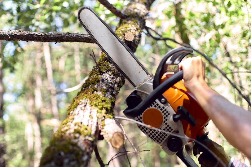 Đang cưa cây, bị máy cưa cứa vào cổ nguy kịch - hình ảnh 1