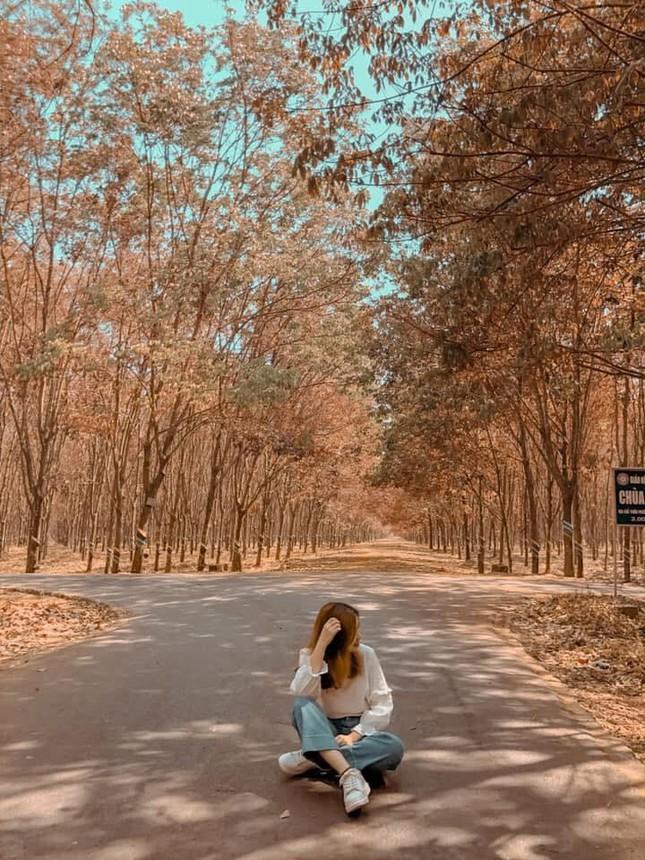 Bình Phước: Vẻ đẹp hoang sơ từ những cánh rừng cao su mùa thay lá lãng mạn như phim Hàn - 4