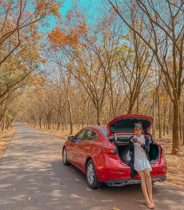 Bình Phước: Vẻ đẹp hoang sơ từ những cánh rừng cao su mùa thay lá lãng mạn như phim Hàn - 3