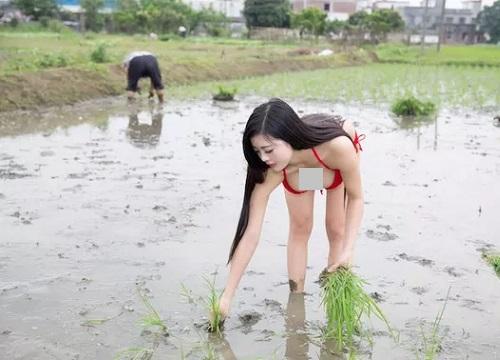 """Nữ sinh Biên Hòa diện bodysuit đi gặt lúa bị nhận xét """"trang phục sai khung cảnh"""" - 4"""