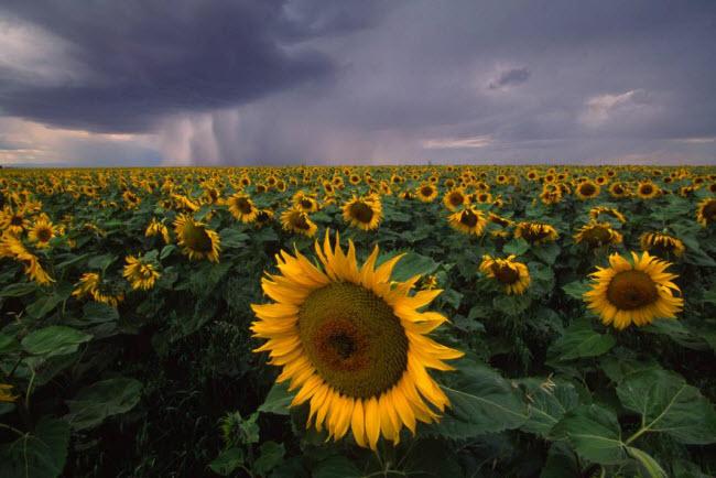 Ngắm phong cảnh thiên nhiên đẹp mê hồn khắp thế giới - hình ảnh 6