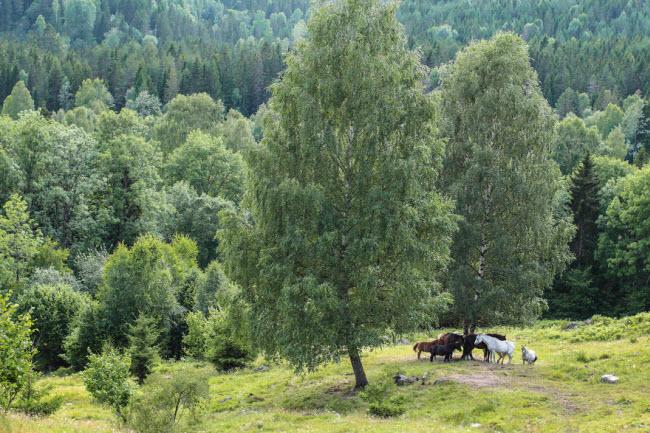 Sững sờ trước cảnh thiên nhiên đẹp như cổ tích ở Na Uy - hình ảnh 9