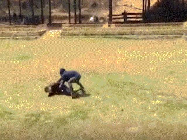 Thấy chủ nhân bị đánh, voi hành động đáng kinh ngạc