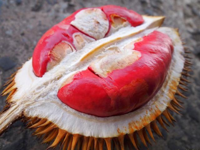"""Sầu riêng ruột đỏ là có thật, giá đắt gấp đôi sầu riêng thường vẫn """"cháy hàng"""""""