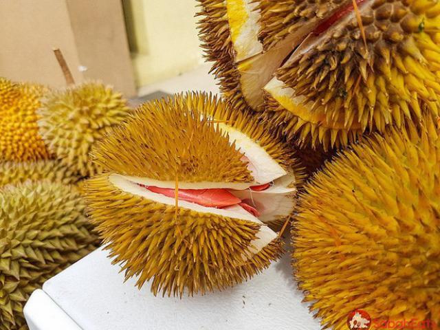 Quả cực đắt nhưng cây giống sầu riêng ruột đỏ còn đắt gấp 2 lần