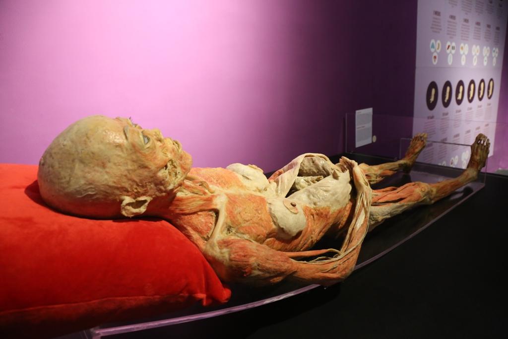 Thông tin mới vụ triển lãm xác người thật ở TP.HCM - 1