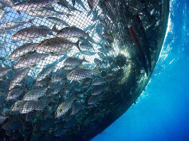 Cận cảnh lồng nuôi cá hồi lớn nhất thế giới dưới đáy biển