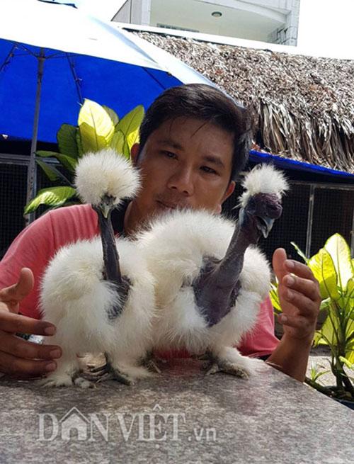 """Cực lạ: Loài gà có cổ như rắn """"hớp hồn"""" giới nhà giàu Việt Nam - 1"""