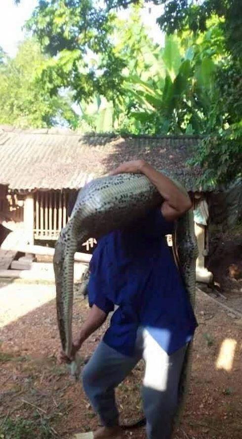 Lạng Sơn: Kinh hãi dê 15 kg bị trăn rừng nuốt trọn - hình ảnh 2