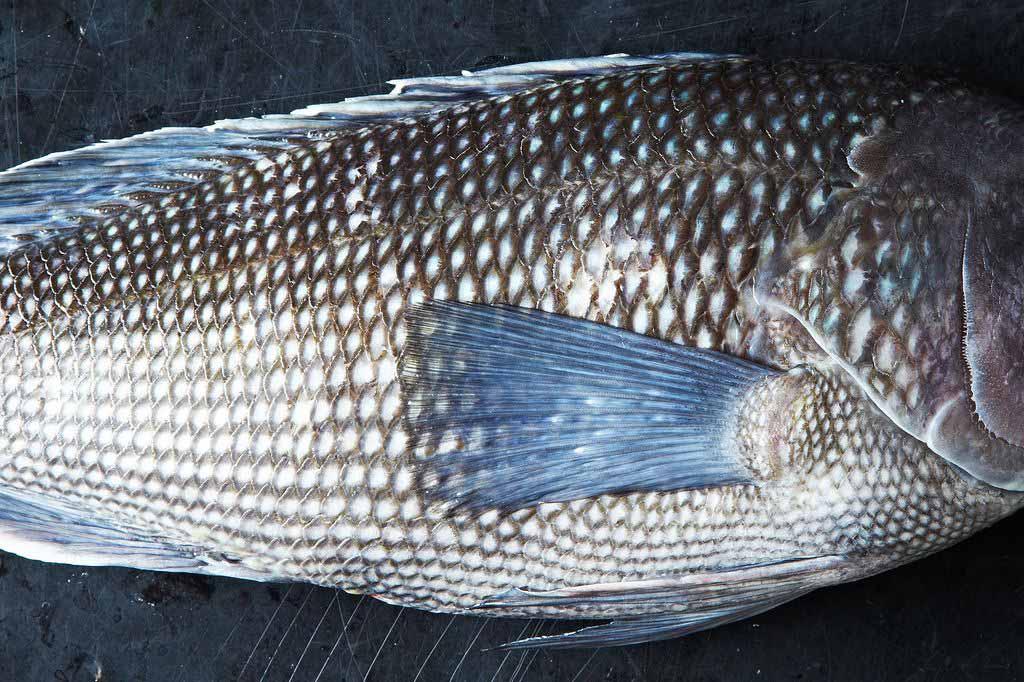 Bí quyết chọn cá tươi ngon, không sợ mua nhầm cá ươn - 3