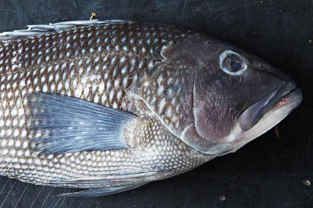 Bí quyết chọn cá tươi ngon, không sợ mua nhầm cá ươn - 2