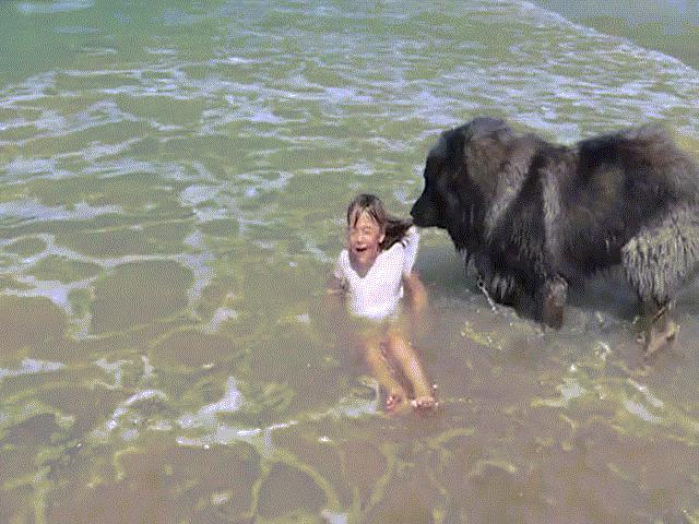 """Hành động cảm động của chú chó khi thấy chủ """"gặp nguy"""" ngoài biển"""