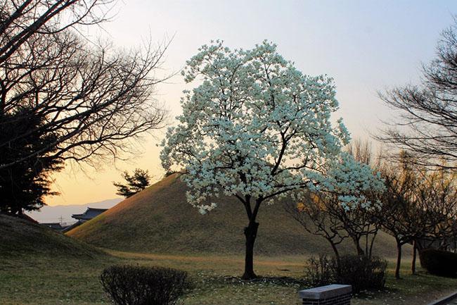 Nếu đi du lịch Hàn Quốc, đừng chỉ đến Seoul mà hãy khám phá 6 địa điểm này! - 3