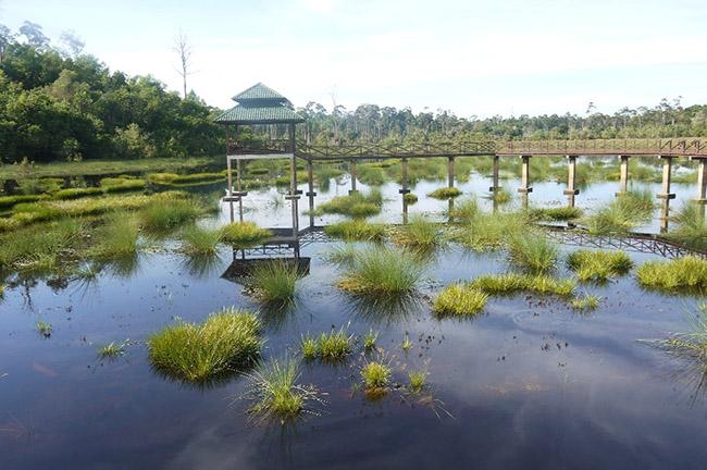 Khách du lịch châu Á ùn ùn kéo đến Brunei để chiêm ngưỡng những địa danh này - hình ảnh 10