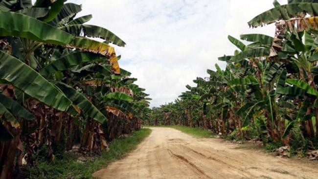 Khách du lịch châu Á ùn ùn kéo đến Brunei để chiêm ngưỡng những địa danh này - hình ảnh 8