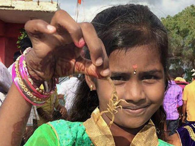 Nghi lễ kỳ lạ của người Ấn Độ cho phép người và bọ cạp sống chơi đùa với nhau - hình ảnh 5