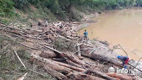 Thanh Hóa: Thót tim trước cảnh người dân đổ xô đi vớt củi giữa dòng nước dữ - hình ảnh 13