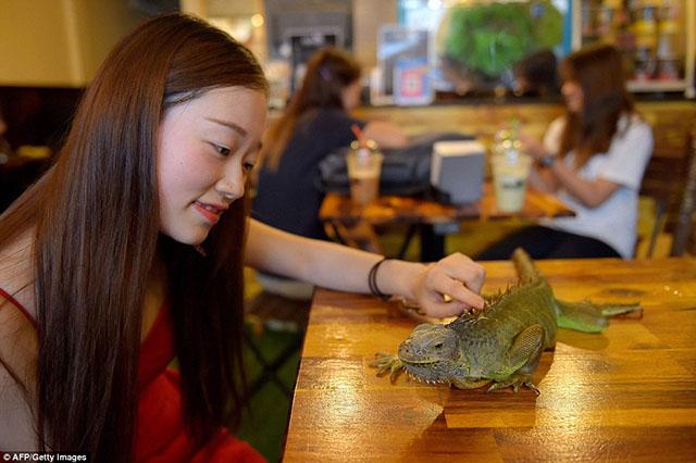 Đừng sợ, bạn có thể đùa giỡn với những sinh vật tử thần ngay tại quán café này - 9