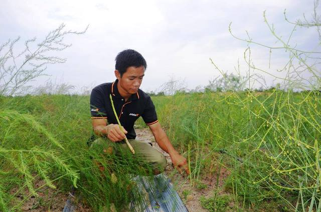 Tiến sĩ về quê làm giàu bằng nghề tay trái - trồng rau trên cát - 1