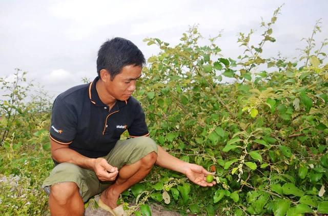 Tiến sĩ về quê làm giàu bằng nghề tay trái - trồng rau trên cát - 3