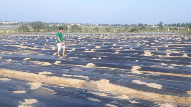 Tiến sĩ về quê làm giàu bằng nghề tay trái - trồng rau trên cát - 4