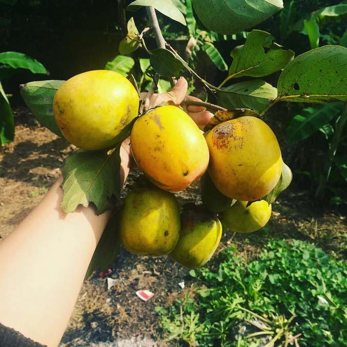 5 món quà vặt đặc trưng của mùa thu Hà Nội - 4