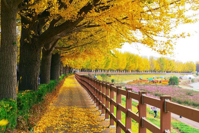 Mùa thu ở Hàn, Đài, Thái có gì hấp dẫn? - 1