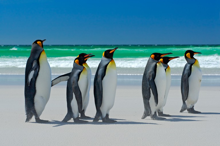 Những hòn đảo kỳ lạ nhất vùng Nam Mỹ - 4