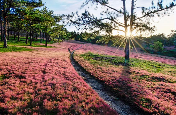 """Thu về đừng quên buổi hẹn với """"mùa cỏ hồng"""" Đà Lạt - 3"""