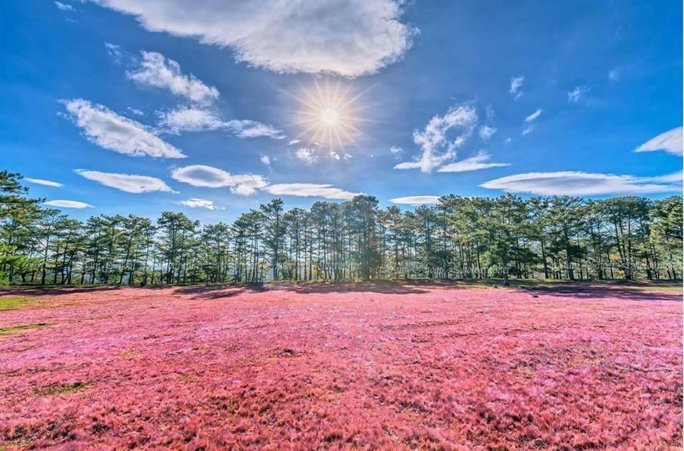 """Thu về đừng quên buổi hẹn với """"mùa cỏ hồng"""" Đà Lạt - 6"""