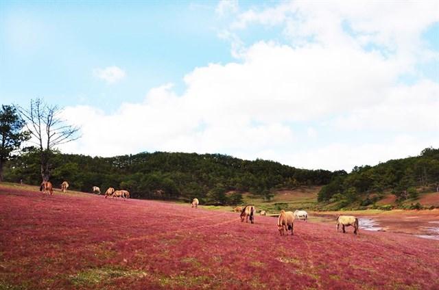 """Thu về đừng quên buổi hẹn với """"mùa cỏ hồng"""" Đà Lạt - 9"""
