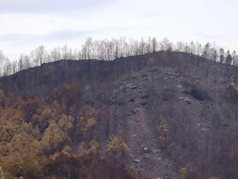 Rừng ở 5 tỉnh miền Trung bị cháy - 1