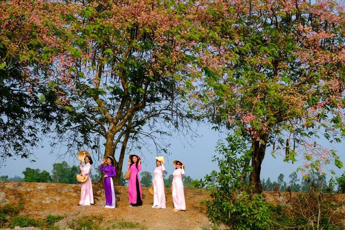 Về miền Tây ngắm hoa ô môi hồng rực rỡ, một lần đến là ngất ngây quên lối về - 3