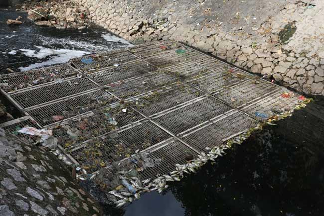 Sông Tô Lịch lại đen kịt, dày đặc cá chết sau xả 1 triệu m3 nước - 11